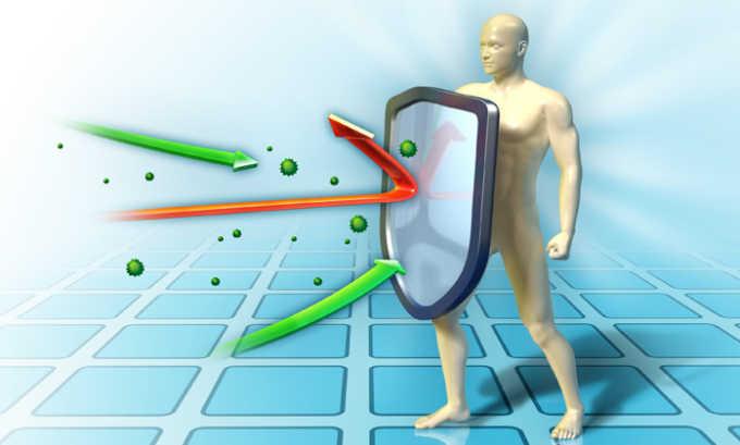 Также гранат повышает гемоглобин и иммунный статус