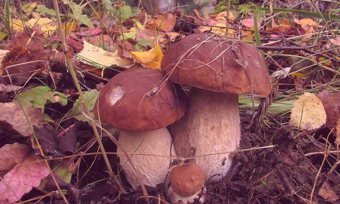 При панкреатите из меню исключаются грибы