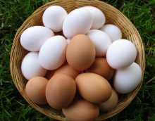 Можно ли яйца при панкреатите?