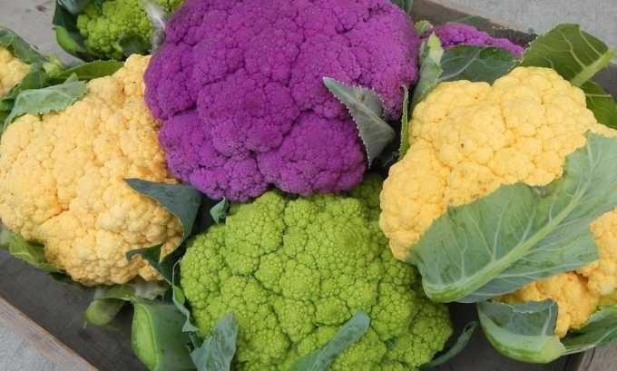 Из всех видов капусты в питании больного допускается только цветная капуста, которая легко усваивается в организме