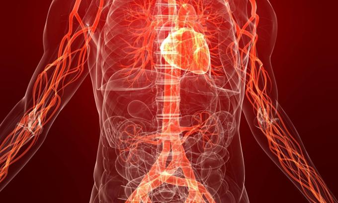 Гранат улучшает артериальное давление, тонус сосудов и кровообращение