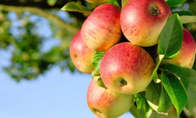 В сыром виде допускаются только яблоки, и то лишь в период ремиссии