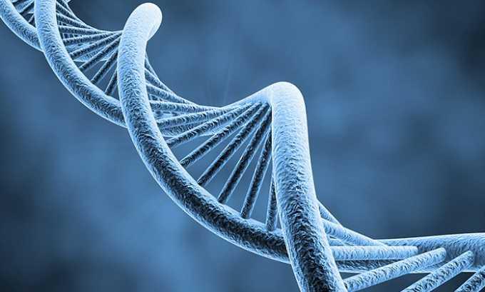 Некоторые особенности строения пищеварительной системы, способствующие развитию панкреатита, передаются по наследству