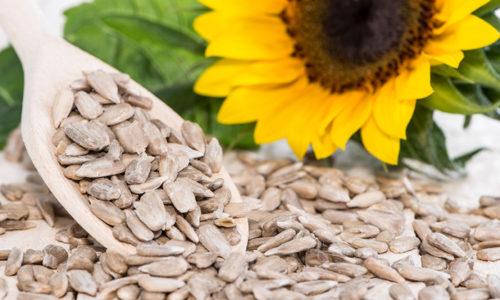 Семена подсолнуха при остром панкреатите употреблять в пищу нельзя