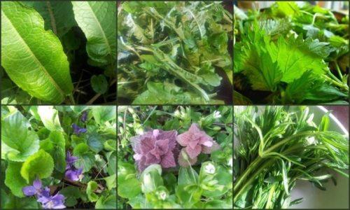 Травы при панкреатите могут оказать дополнительное лечебное воздействие, особенно в период ремиссии и для профилактики заболевания