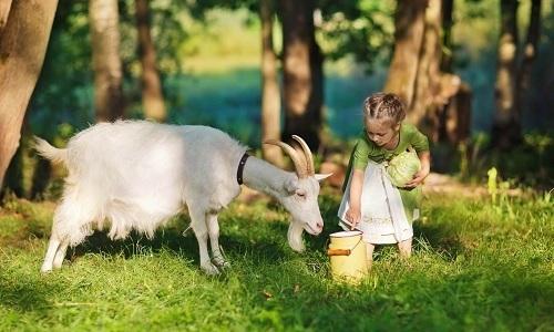 Если цельное молоко все-таки вызывает дискомфорт, то его можно заменить козьим