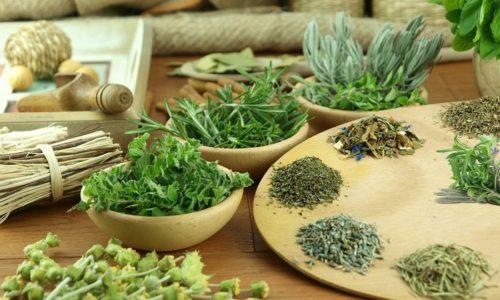 Используя лекарственные травы при холецистите и панкреатите, можно ускорить процесс восстановления органа после обострения, а в период ремиссии создать предпосылки для предупреждения приступа